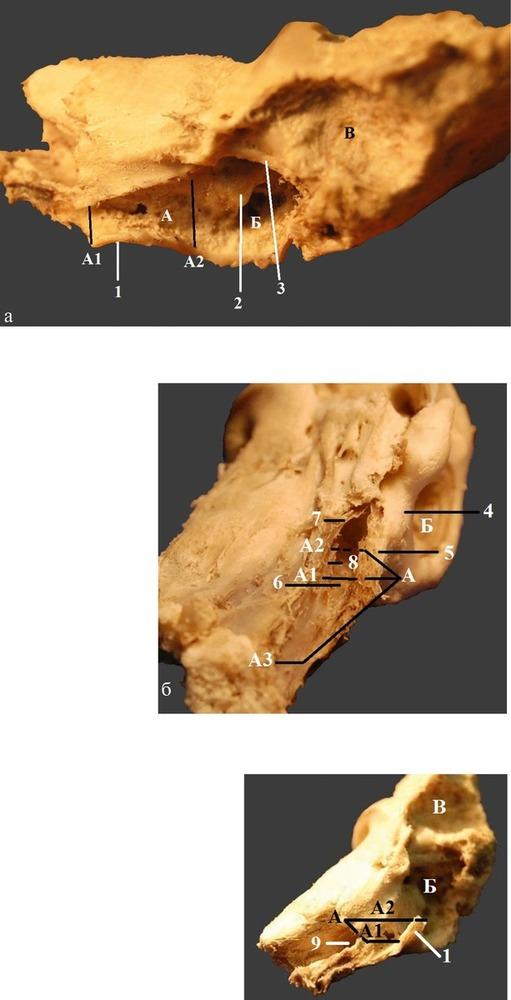 Введение. Анатомические особенности уха у детей.